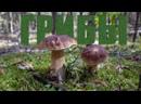 Поиск белых грибов в окрестностях села Смолькино