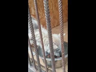 Видео от Помощь собакам. Тула,Тульская область