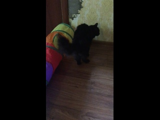 Video by Том и Машенька ВОИНЫ ФИП (FIP)