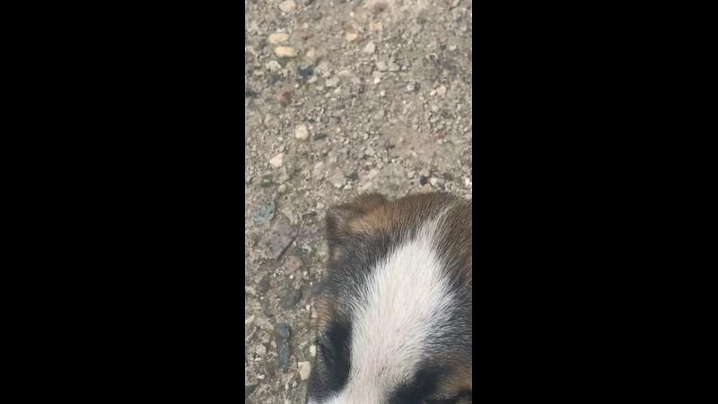 Видео от Нины Кудрявцевой