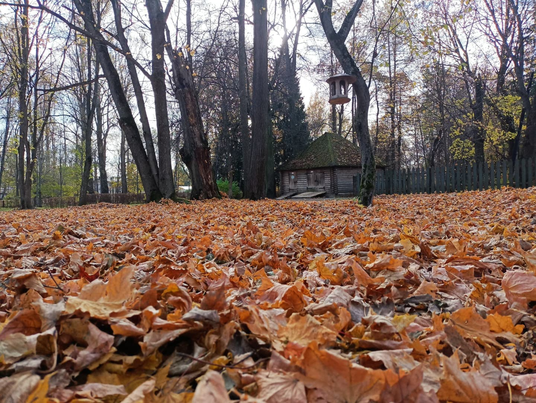 Осень в кадре