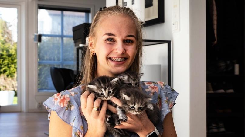 В Норвегии за последний год резкий рост спроса на домашних котов и кошек. Число...