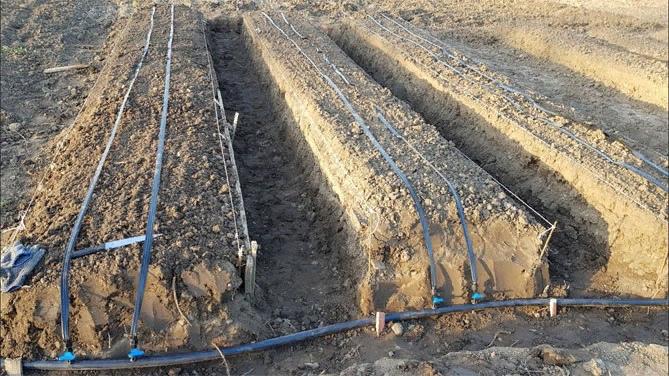 Выращивание ремонтантной клубники, изображение №12