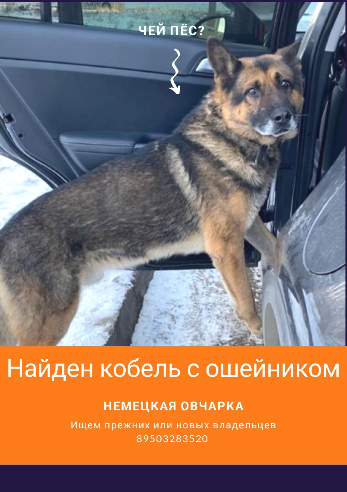Собака находится на передержке. 8-950-328-35-20