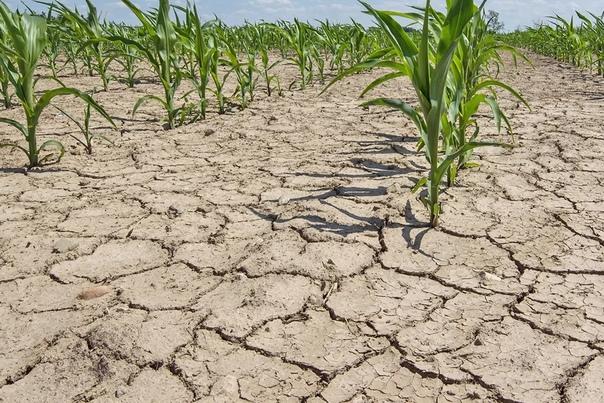 23 июля 2021 года в связи с почвенной засухой на всей террит