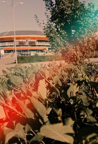 Жухлость листьев настораживает 🍂#Владивосток...