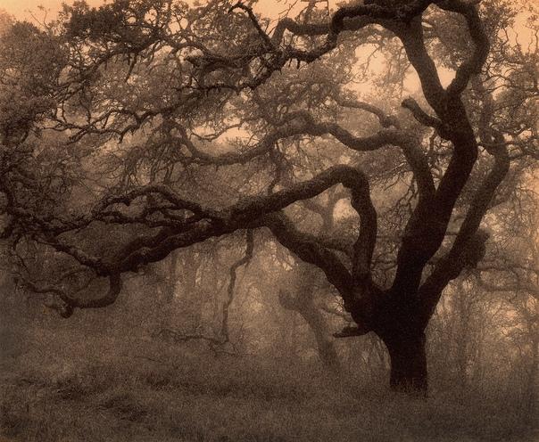 Черно-белая красота Пола Козала Представляем проект американского фотографа-самоучки Пола Козала «Природа деревьев». Чёрно-белые пейзажи одновременно пленят воображение и будят любопытство.