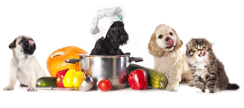 Вам необходимо будет готовить еду для своего питомца отдельно.