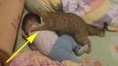 Ребёнок начал плакать , но то что сделала кошка поражает