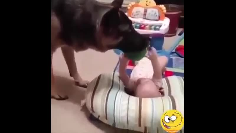 Говорят что собаки лучший друг человека мы говорим что они семья
