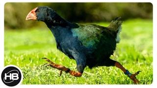 Птицы, Которые Не Умеют Летать. Птицы и факты.