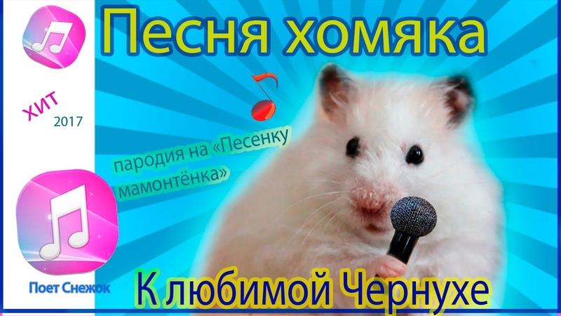 Песня хомяка К любимой Чернухе Поёт Снежок Пародия на Песенку мамонтёнка