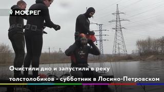 Очистили дно и запустили в реку толстолобиков - субботник в Лосино-Петровском