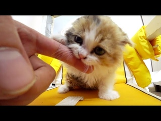 One of the cutest kittens in the world! Simka.