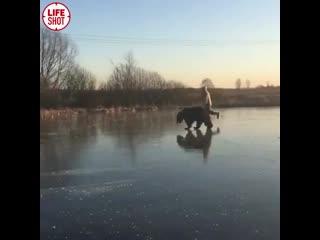 Ничего необычного, просто мужчина катается на коньках с медведем на поводке