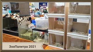 ЗооПалитра 2021 - выставка животных: морские свинки, хомяки, крысы, шиншиллы, дегу, мыши, ежи и др.