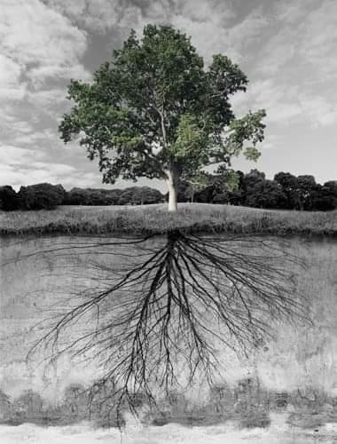 Жизнь всегда казалась мне похожей на растение, которое питается от своего собственного корневища