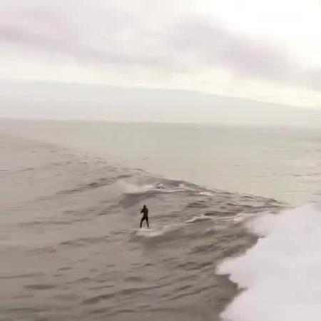 Дельфины перегоняют. · coub, коуб