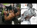 7 Ejercicios para Construir Musculo en la Espalda, 7 Exercises to Build Muscle in the Back
