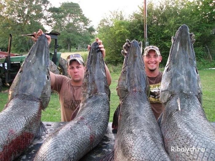 Мужики хотели поймать пару карасей на обед, а поймали четырех динозавров